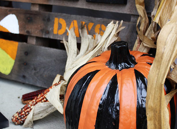 The celebration shoppe no carve pumpkins 0098wl1