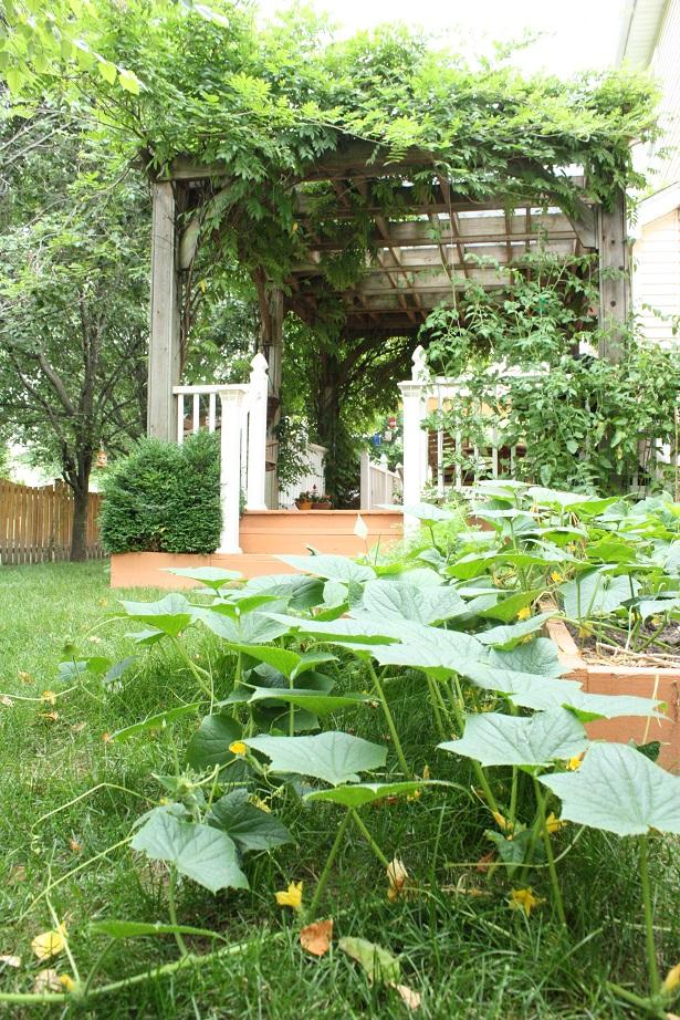 Mini Backyard Garden   Kim Byers, TheCelebrationShoppe.com