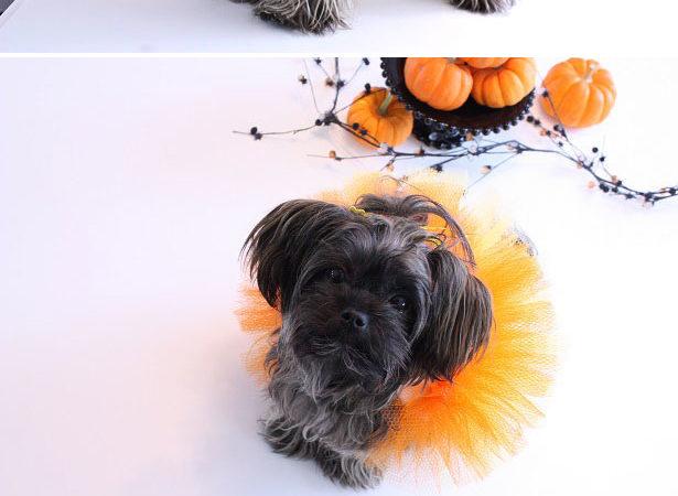 Candy corn halloween pet costume kim byers
