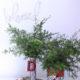 1 diy plaid christmas vases kim byers wl