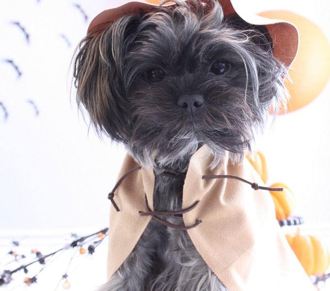 1 ewok star wars pet costume kim byers 6780 680wl