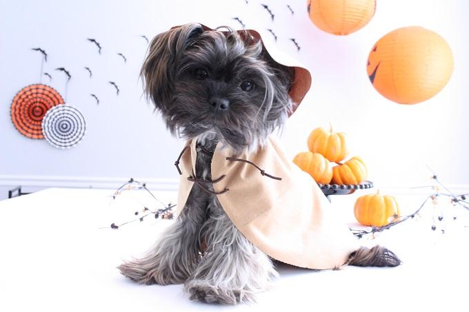 Star Wars Ewok Cloke Halloween Costume